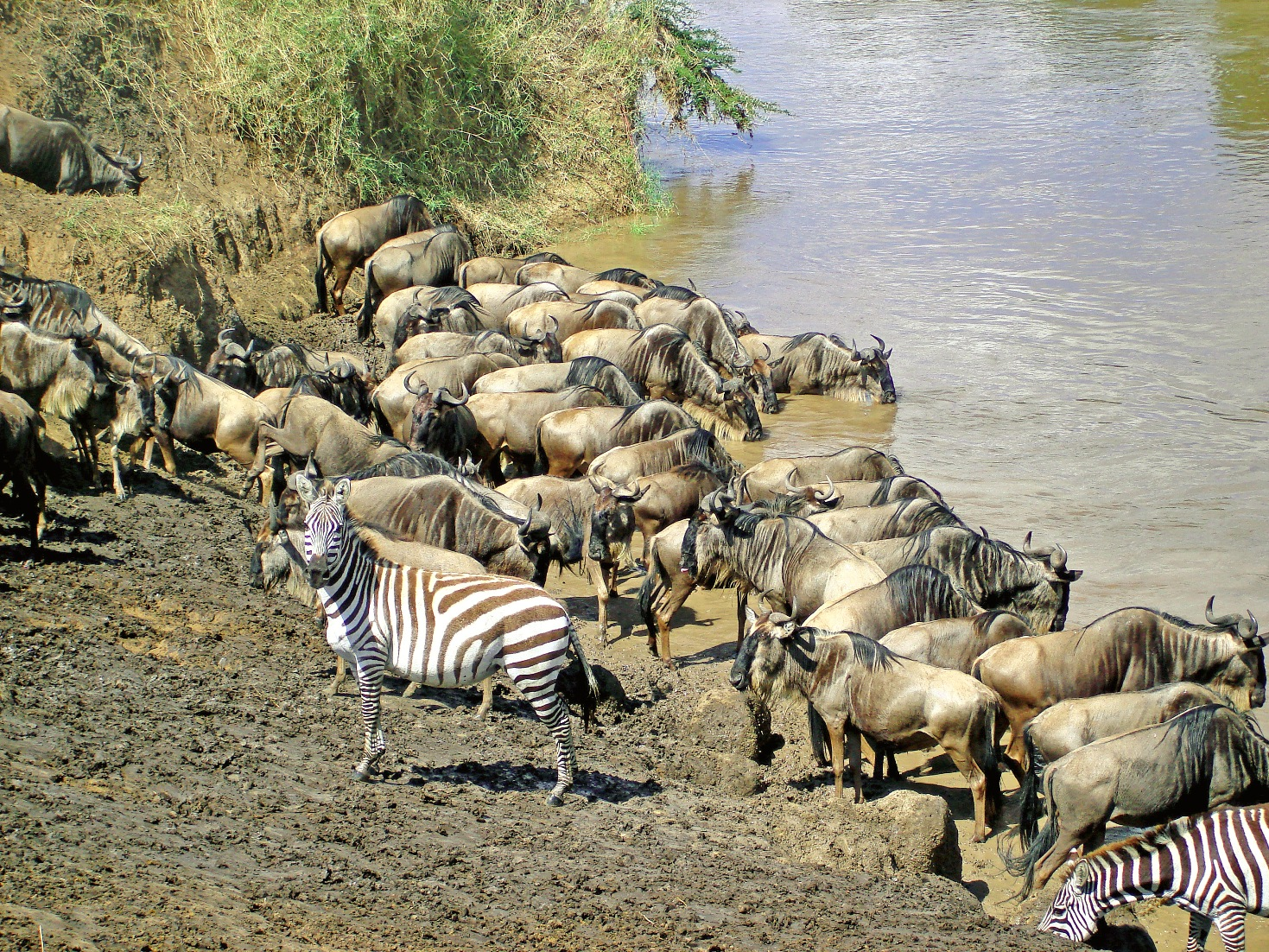 tourite safaris zebra