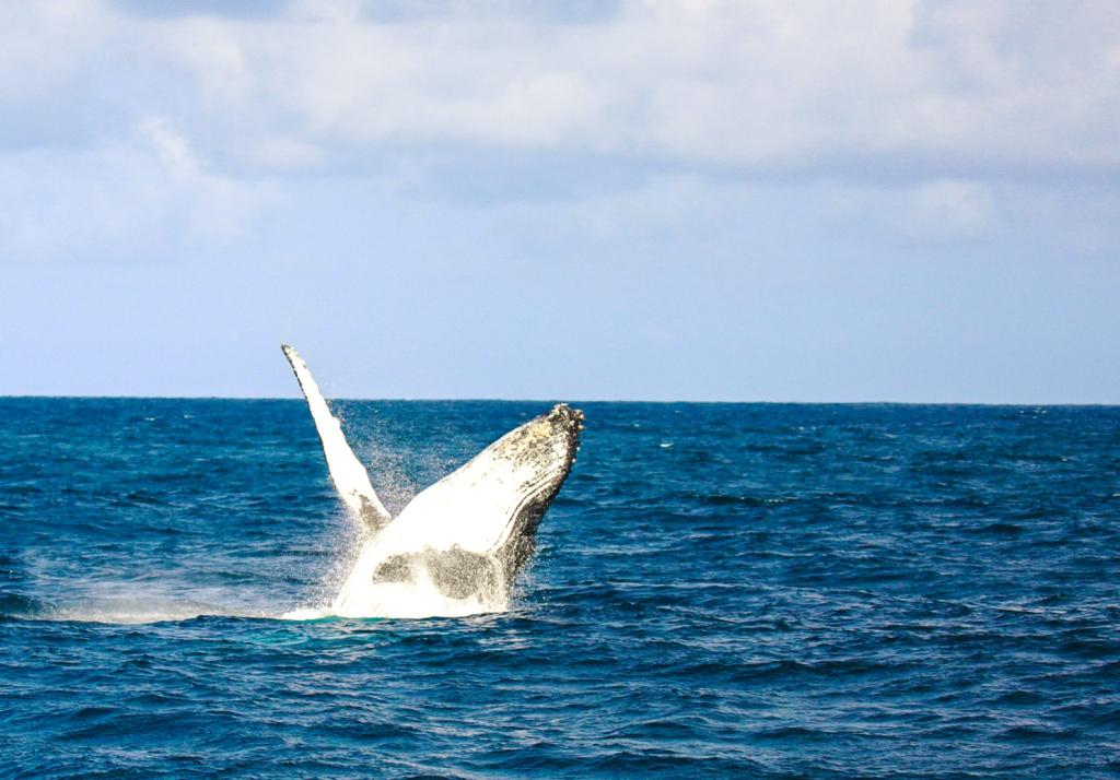 whale_watching_watamu