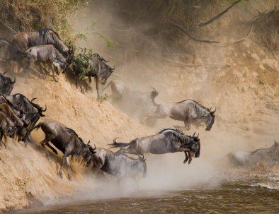 wildebeeste migration_tourite_safaris