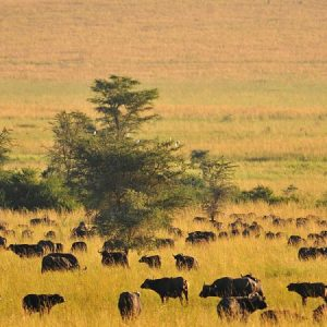 Kidepo Valley National Park 3