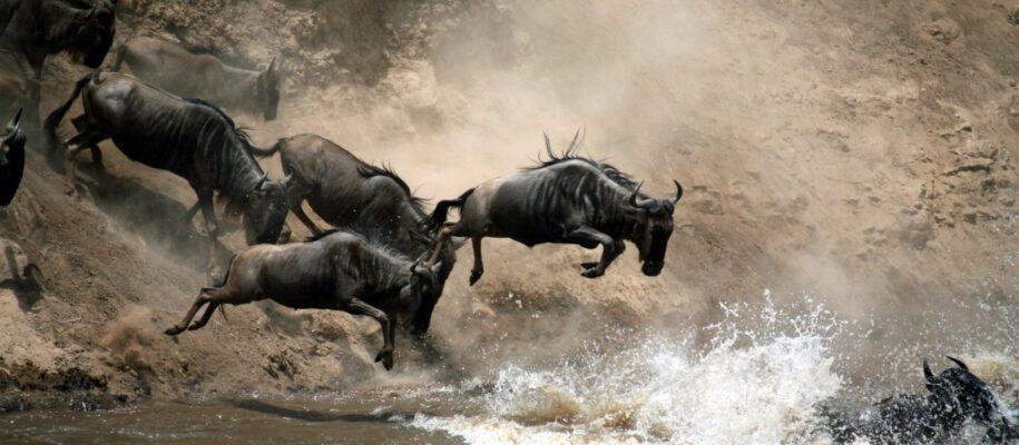 wildebeeste migration_tourite_safaris2